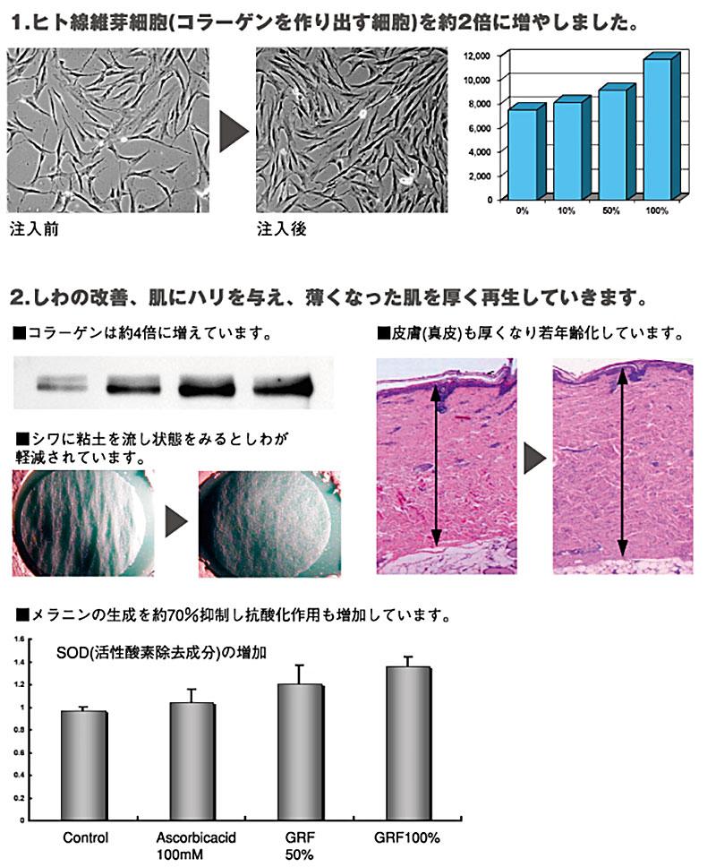 1.ヒト線維芽細胞(コラーゲンを作り出す細胞)を約2倍に増やしました。2.しわの改善、肌にハリを与え、薄くなった肌を厚く再生していきます。)