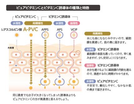 ピュアビタミンCとビタミンC誘導体の種類と特徴